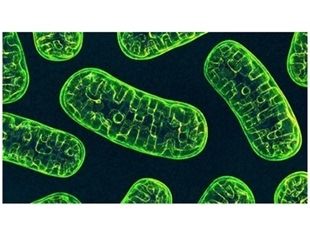 Mitochondrial DNA mutations reduce death risk in patients with bowel cancer
