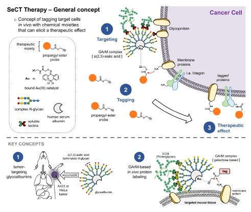 Therapy using artificial metalloenzymes helps reduce tumor growth, finds study