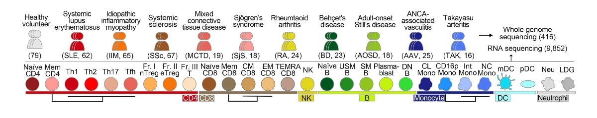 New genetic database maps how immune disorders evolve