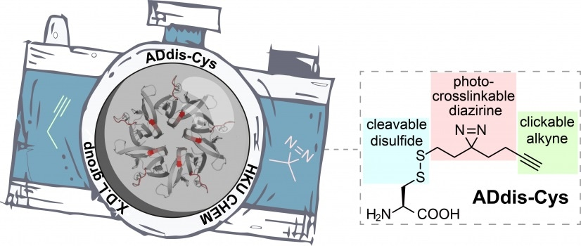 New chemical tool elucidates how proteins recognize and associate with one another