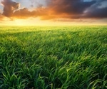 Grasses steal genetic secrets from other species to speed up evolution