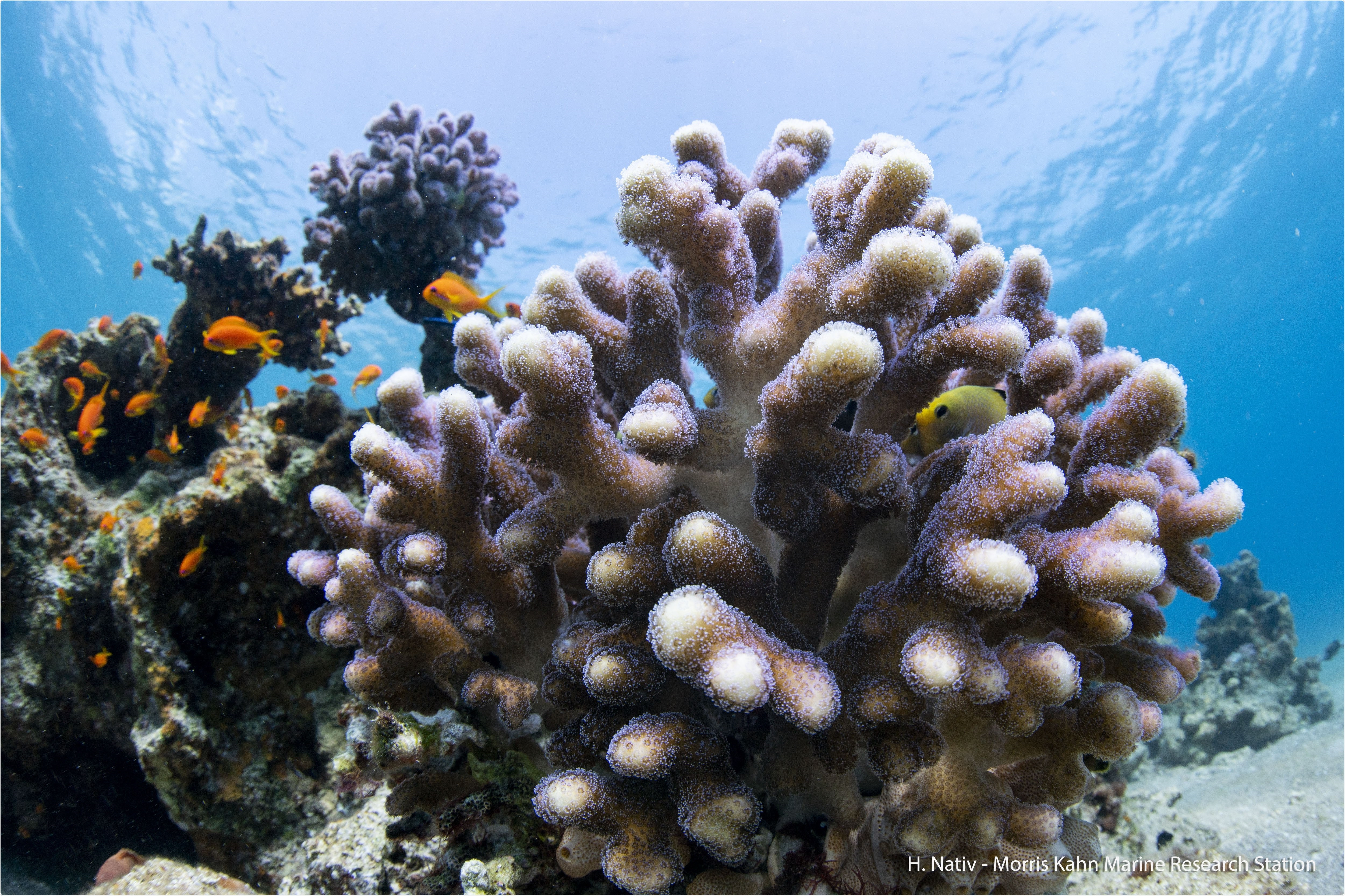 New atlas may support present and future conservation efforts to protect coral reefs