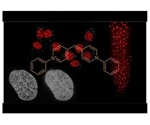 Researchers develop an unprecedentedly flexible new DNA staining probe