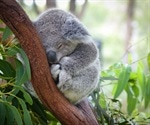 Genomic Analysis for the Conservation of Koalas