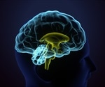 Study unravels the role of proteins in data processing in the brain