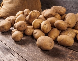 A unique vertical farm can produce 10 times more seed potatoes a year