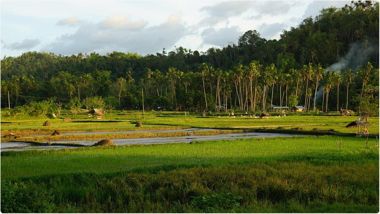 Study reveals warmer nights change the rice plant's biological rhythm