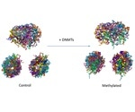 Study describes the impact of DNA methylation on the 3D structure of genome
