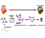 Specific chemical feature of a key protein may lead to neurodegenerative diseases