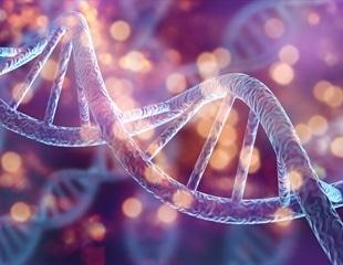 Human cells can convert RNA sequences into DNA