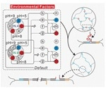 Researchers develop DNA-based switching circuits