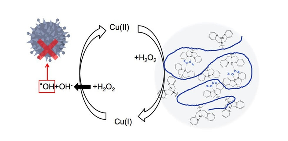 Researchers enhance antibacterial activity of hydrogen peroxide using copper-containing polymers