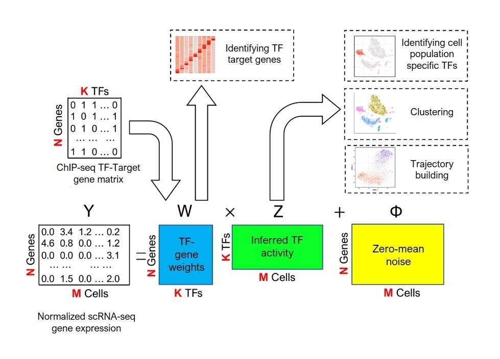 New machine learning method predicts how genes in particular cells are controlled