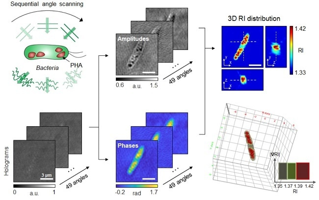 Researchers employ 3D holographic microscopy to visualize bioplastic in living cells