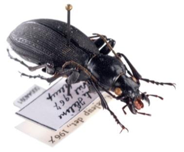 New method to analyze the genomes of museum specimens