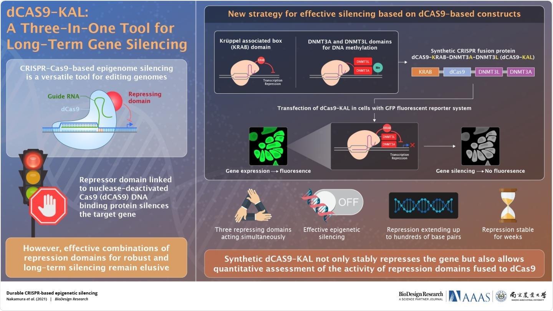 CRISPR-Cas9 system can help in very effective target genes silencing