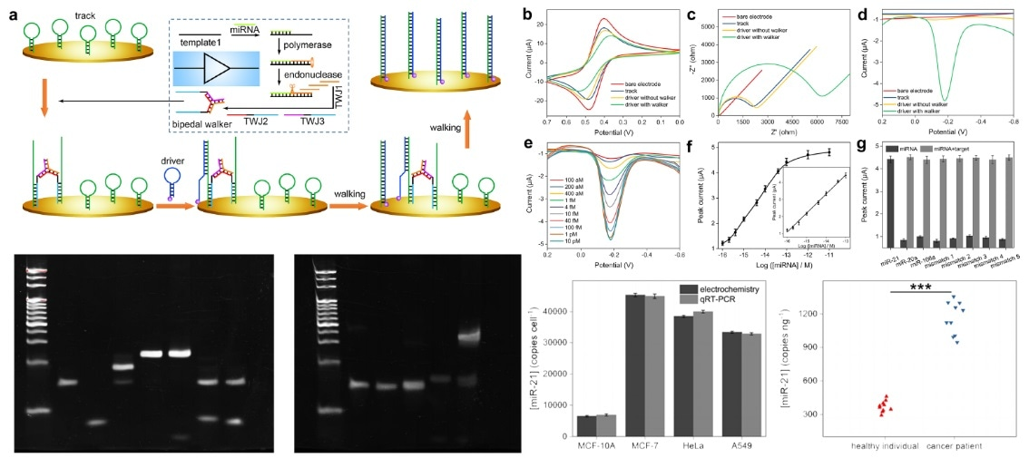 DNA logic circuits fabricated for performing extensive biomedical applications