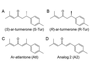 Study discloses neuroprotective properties of aromatic turmerone and its derivatives