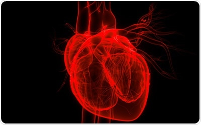 Study analyzes the role of heart cell protein as a potential therapeutic for heart failure