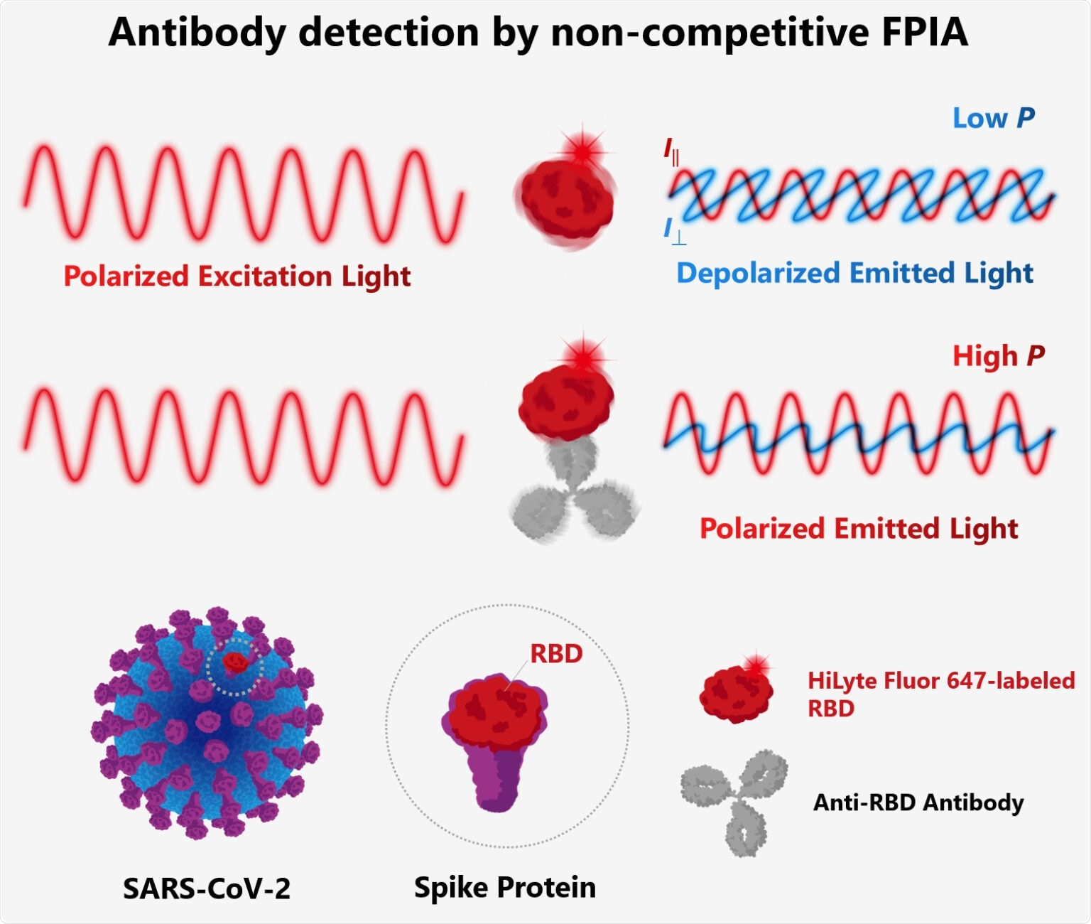 Rapid, more accurate test to detect antibodies against SARS-CoV-2 spike protein