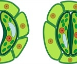 Optogenetic control of stomatal guard cells could help prevent transpiration in plants