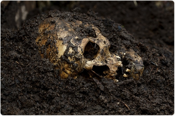 Skull buried in soil