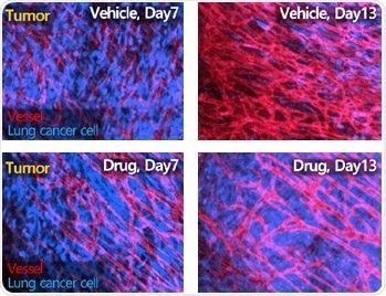 Using IVIM Technology Inc.'s intravital microscopy system for in vivo drug delivery monitoring and in vivo drug efficacy monitoring