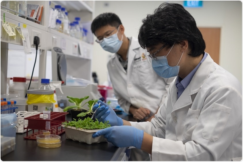 Study unravels key mechanism by which Xanthomonas bacteria infect crops