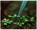 Study shows plants reuse secondary metabolites in primary metabolism