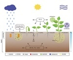 Novel tools can enhance plant root microbiome studies, concludes research