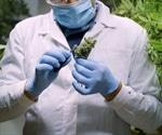 Analyzing Terpenes in Cannabis