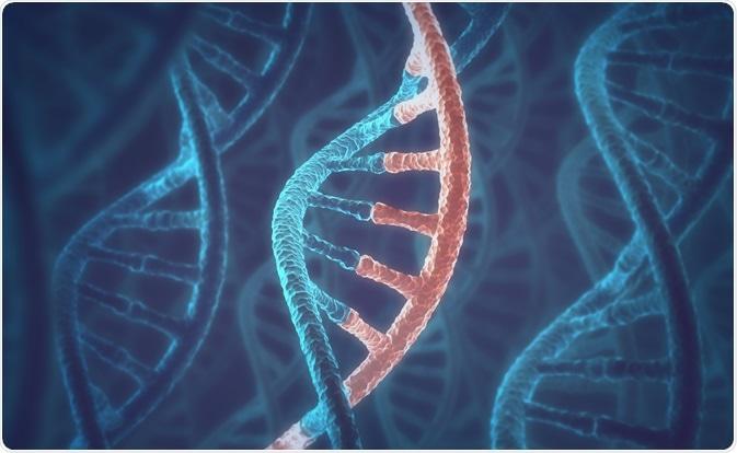 DNA/RNA Concept