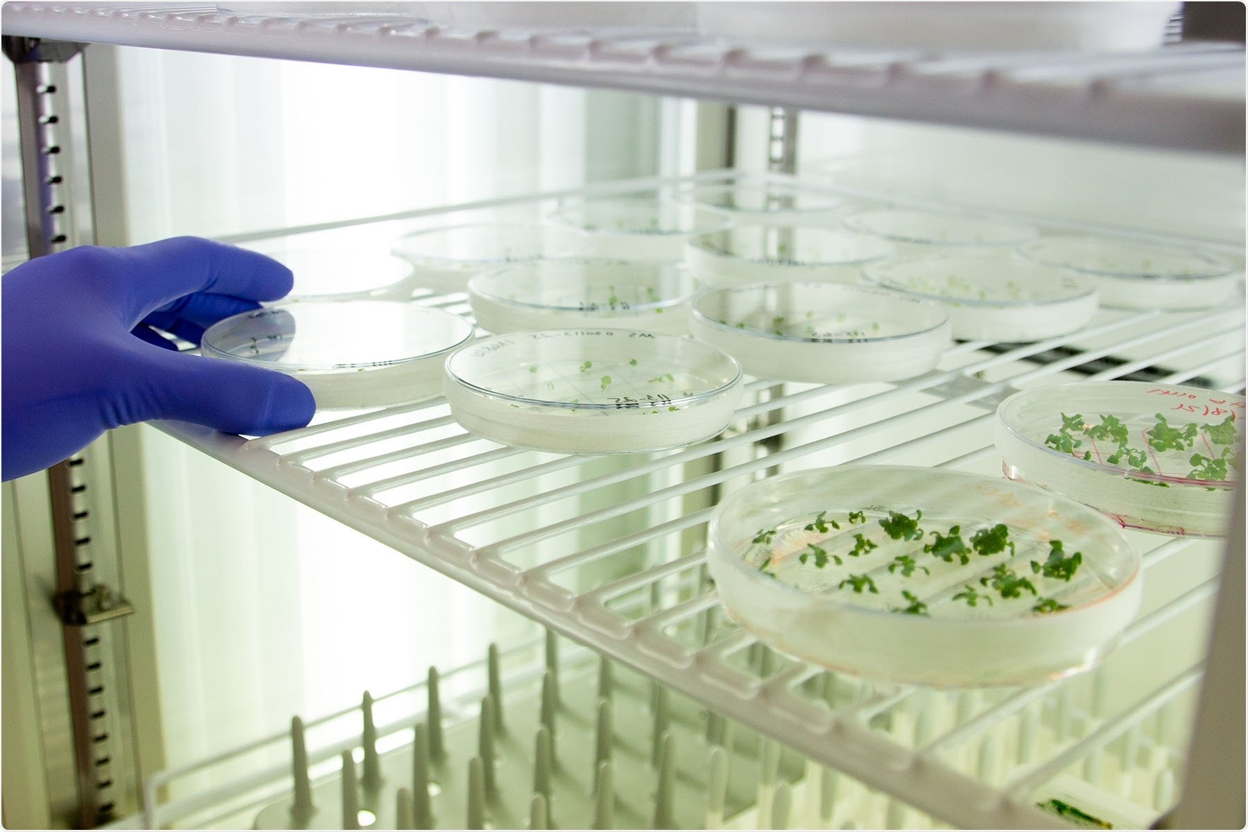 Scientists emphasize the need for commercialization in gene editing research