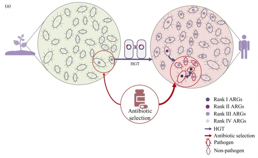 New framework to evaluate the risks of antibiotic resistance genes