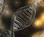 How does the KLF4 transcription factor influence gene expression?