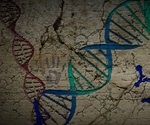 Researchers examine the deep past of human population dynamics