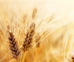 International 10+ Genome Project provides an invaluable resource to improve wheat production