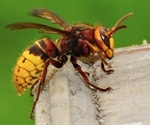 Agricultural Research Service releases genomic data of Asian giant hornets
