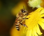 Food scarcity and pesticide exposure reduce blue orchard bee reproduction