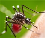 Zika virus infection during pregnancy can cause severe abnormalities in the fetus