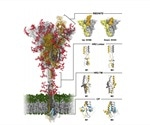 Computational study of the structure and dynamics of glycosylated SARS-CoV-2