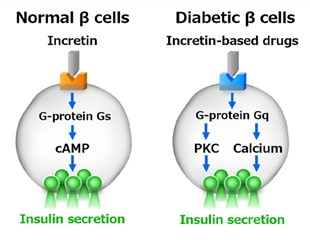 Researchers explain the effectiveness of anti-diabetic drug