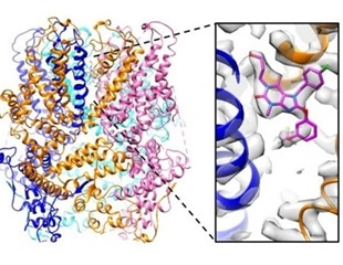 Study shows how drug-like small molecules regulate the activity of ion channels