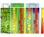 """Researcher creates """"leaf profile"""" of components involved in CO2 journey"""