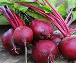 Beetroot peptide may help treat inflammatory, neurodegenerative diseases