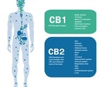 Comparison of Receptor Pharmacology in Cannabinoids
