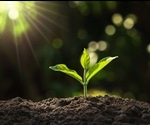 A Guide to Plant Hormones