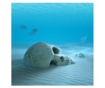 Certain proteins in bones could help estimate the time of death