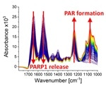 Infrared spectroscopy reveals DNA molecular processes in real time