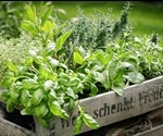Scientists Revealed Usefulness Of Culinary Herbs
